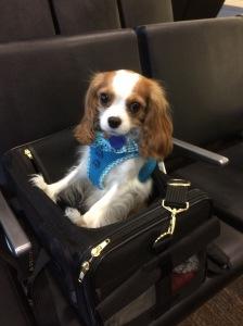 Traveling Colette